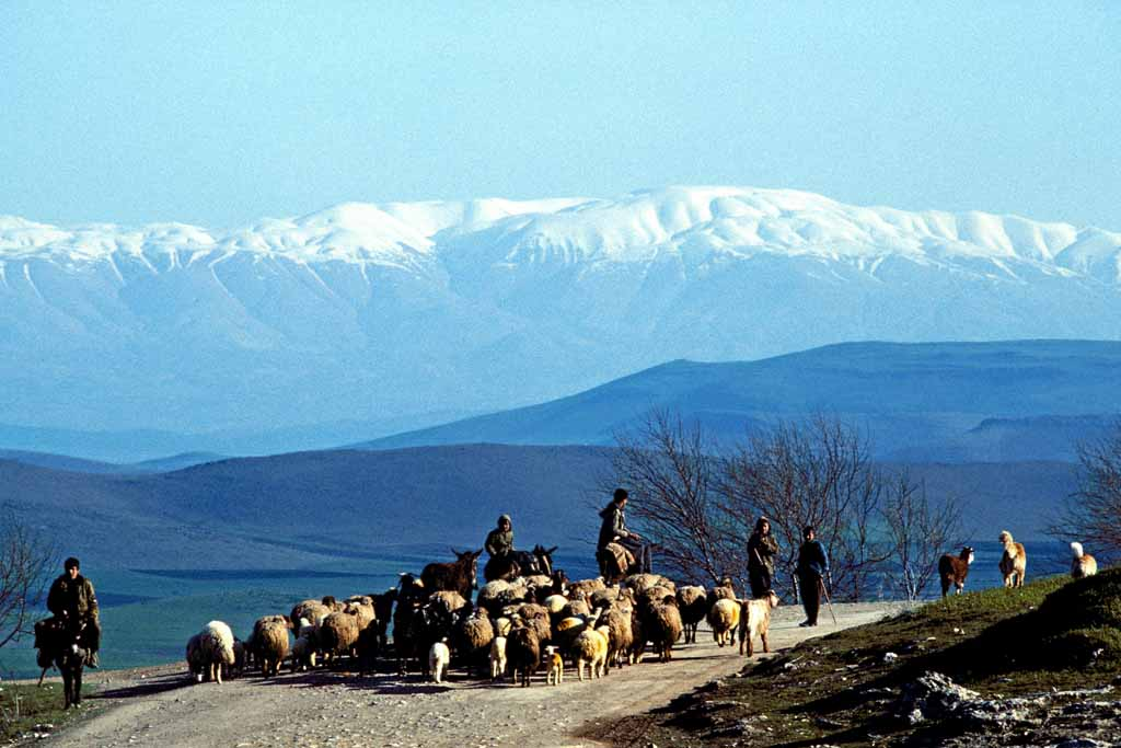 Turkey. Sheep herders and farmers on donkeys meet on road. Taurus mnountains in background. W1048