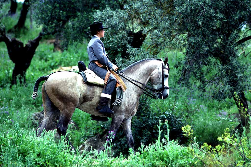 Proud young caballero on pure-bred Spanish horse on his way to local fiesta near Seville, Spain, S1702