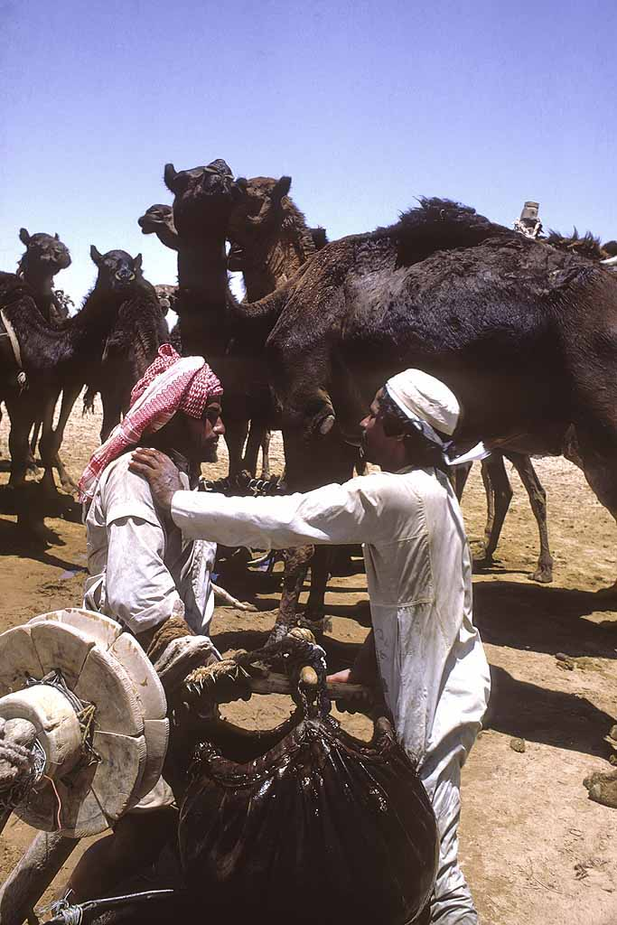 Al-Murrah Bedouin watering camels from deep well in the Rub al-Khali, the Empty Quarter, of Saudi Arabia. W10367.