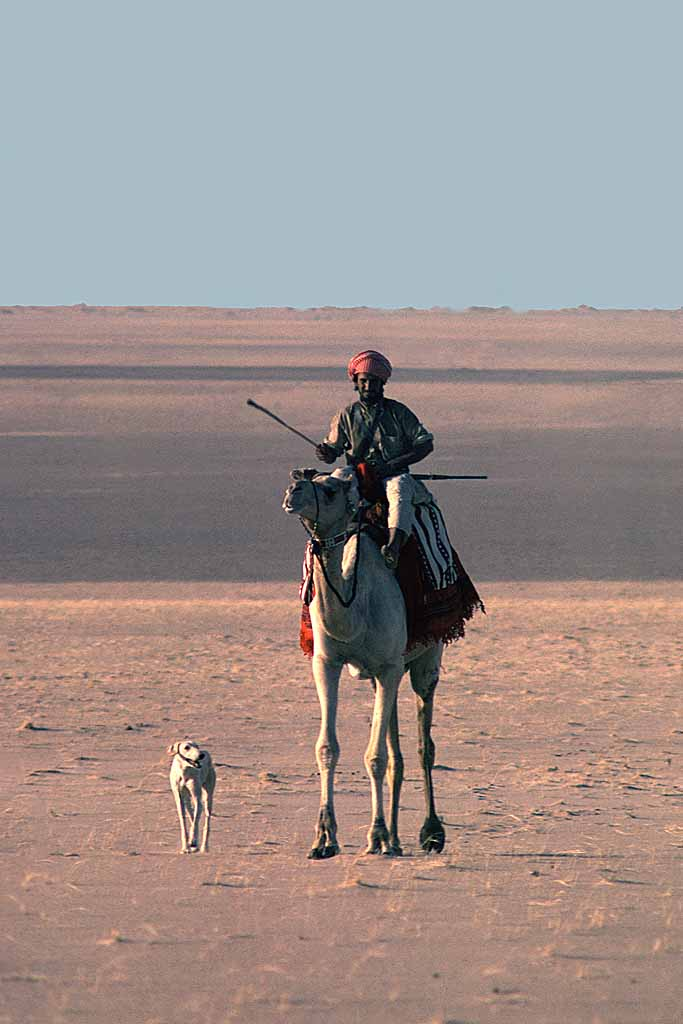 Bedouin riding with hunting rifle accompanied by his saluki, the traditional desert dog. W8923