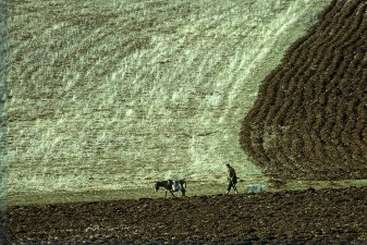 Turkish farmer, donkey and dog striding across plowed fields. W1012