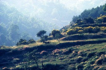Horse running wild and free in the wilderness of the Alpujarras mountains, Andalusia, Spain. S0375