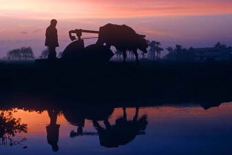 At dawn in the Nile Delta a young boy oversees a cow turning a waterwheel to irrigate fields. W10655