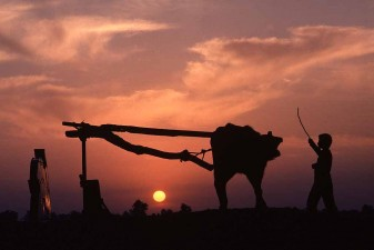 Waterbuffalo drives water-wheel in Nile Delta at dawn. W3801